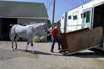 Sallee Horse Vans CDL Drivers